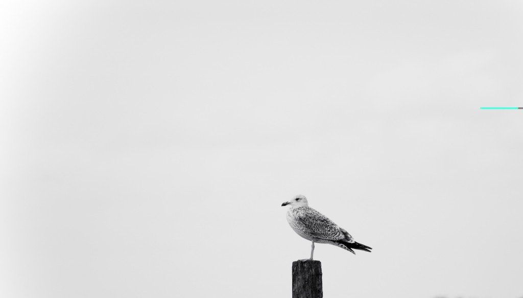minimal_by_sonew